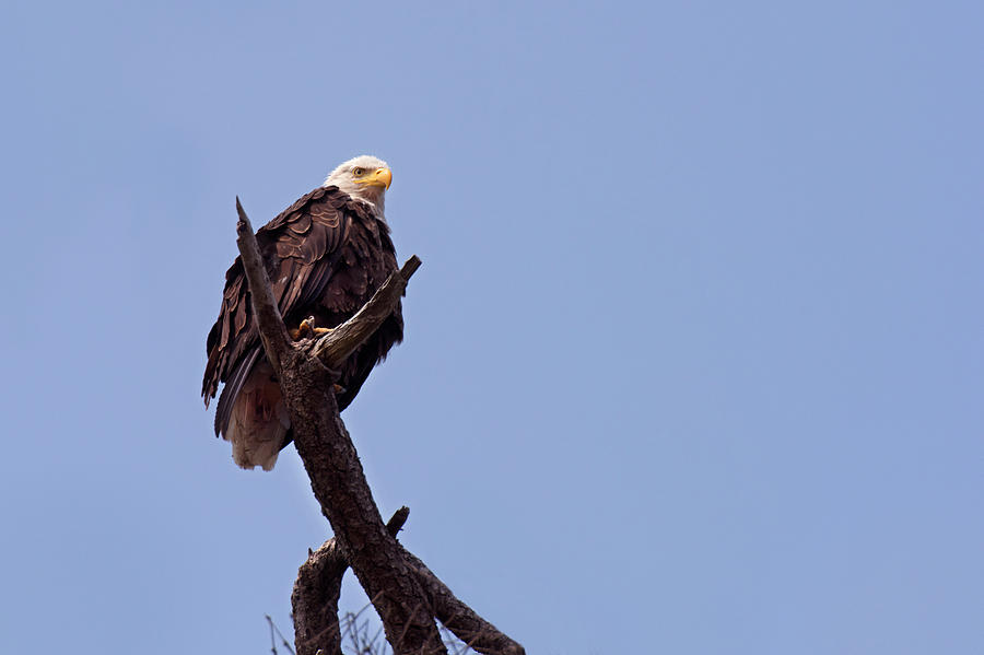 Eagle's Perch by David Lunde