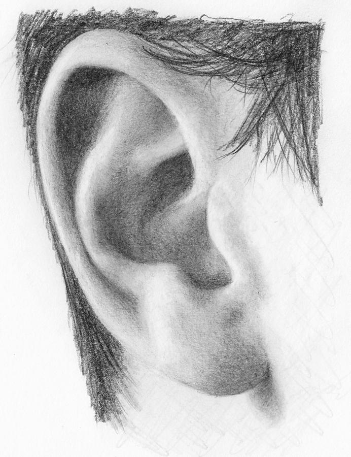 Pencil Drawing - Ear Study by Nolan Clark
