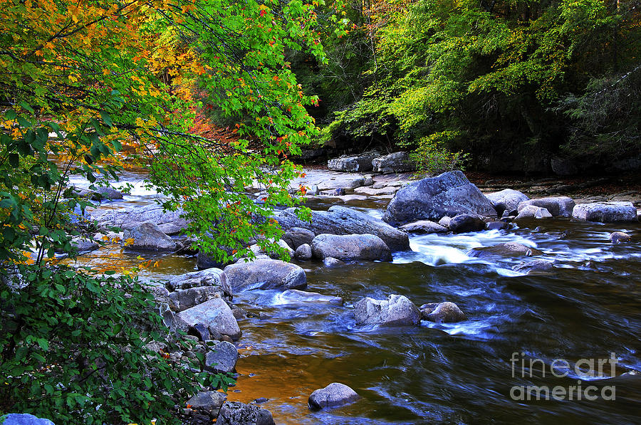 Monongahela National Forest Photograph - Early Autumn Along Williams River by Thomas R Fletcher