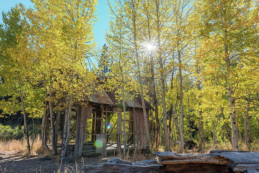 Early Autumn Foliage Outside A Shack In Nature, Landscape With Green, Yellow Trees, Sun, Blue Sky Photograph