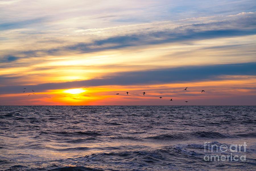 Early Bird Photograph - Early Bird  by Michael Ver Sprill