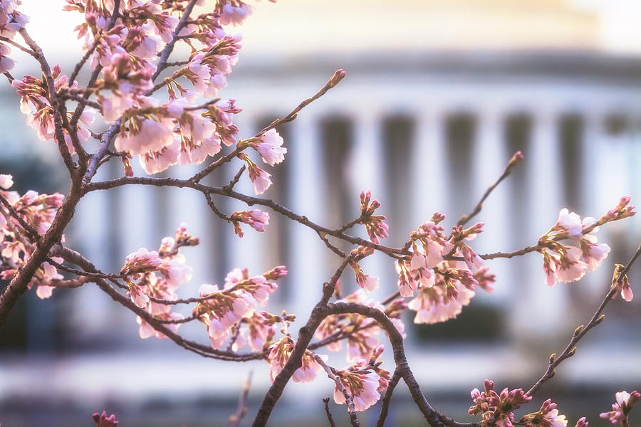Washington Dc Photograph - Early Bloom by Edward Kreis