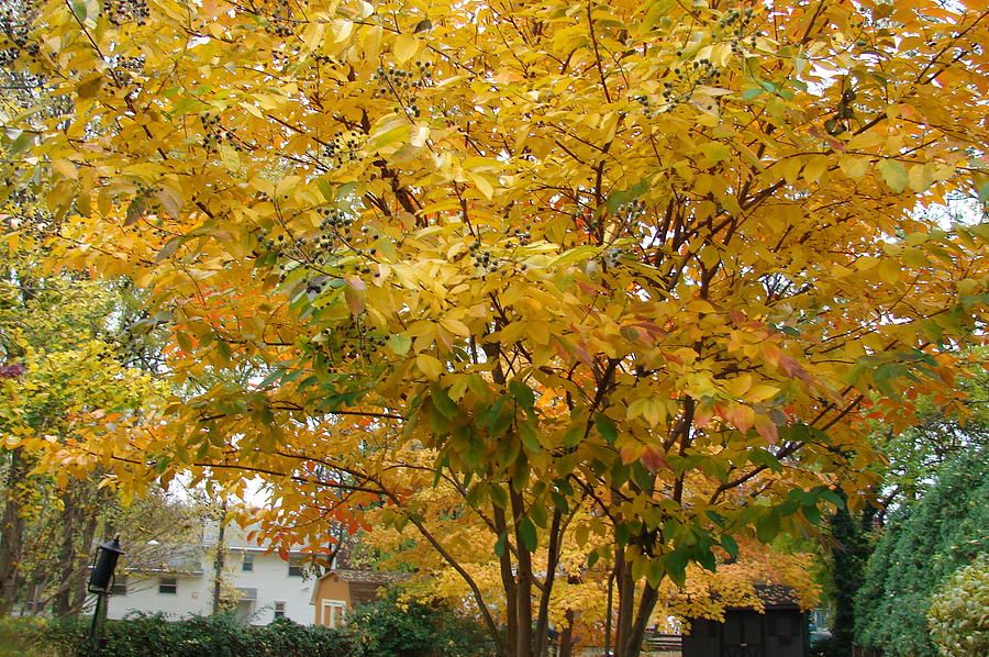 Fall Photograph - Early Fall by Gregory Smith