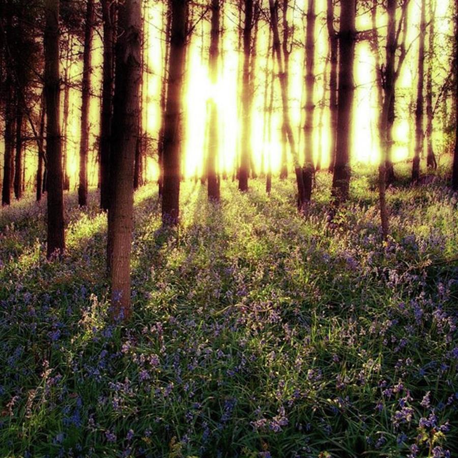 Sunrise Photograph - Early Morning Amongst The by John Edwards