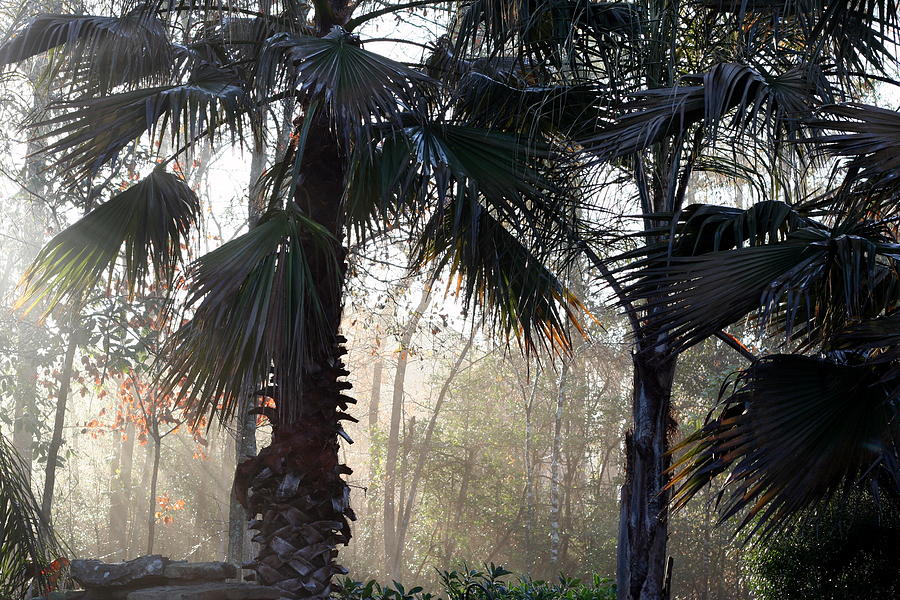 Early Morning Light Photograph - Early Morning by Billie Earley