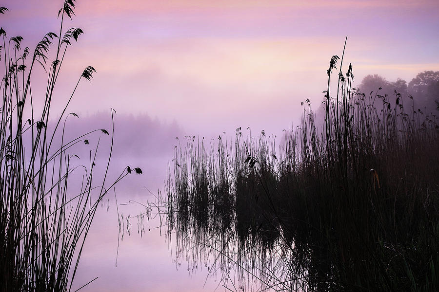 Landscape Photograph - Early Morning By The Pond  by Holger Richter
