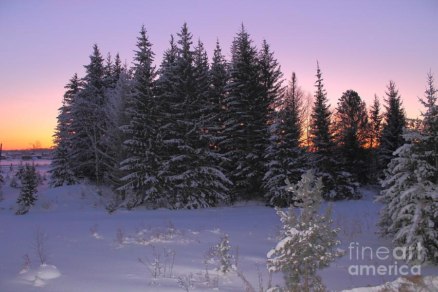 Early Morning. Colourful Sunrise In A Forest In Winter. Photograph