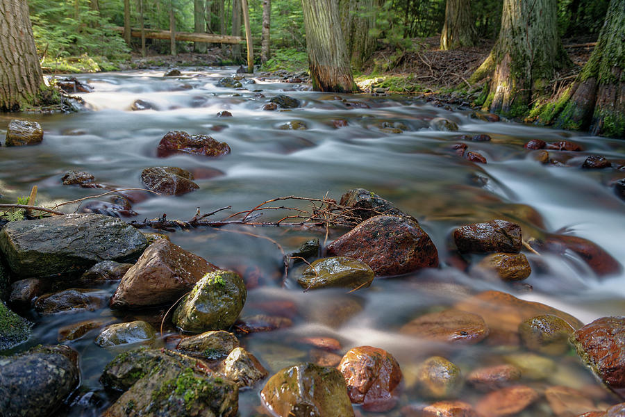 Early Morning Creek by Roderick Bley