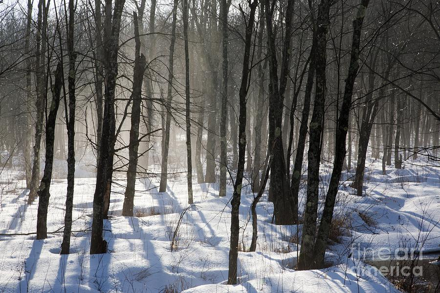 Fog Photograph - Early Morning Fog In A New Hampshire Forest by Erin Paul Donovan