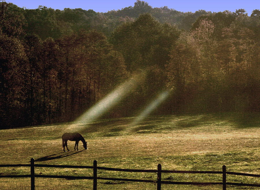 Grazing Horse Photograph - Early Morning Grazing by Diane Merkle