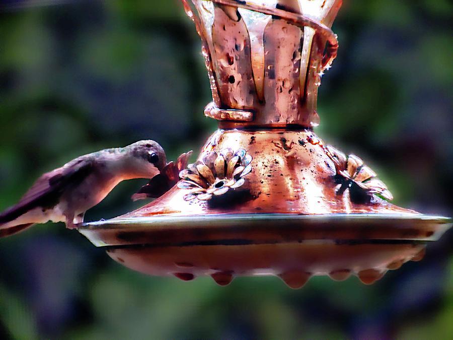 Hummingbird Photograph - Early Morning Hummer by Kirby Maxwell