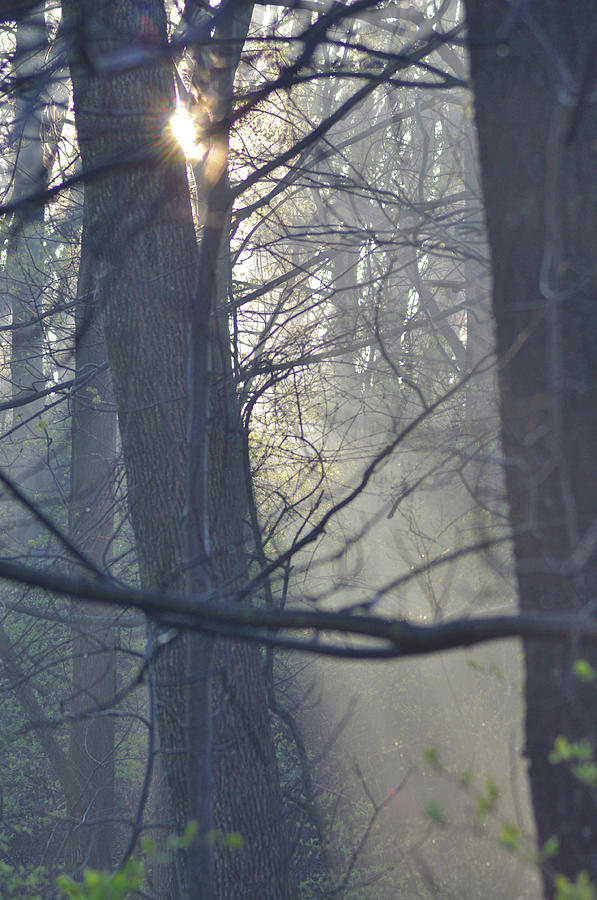 Rays Photograph - Early Morning Rays by Bill Cannon