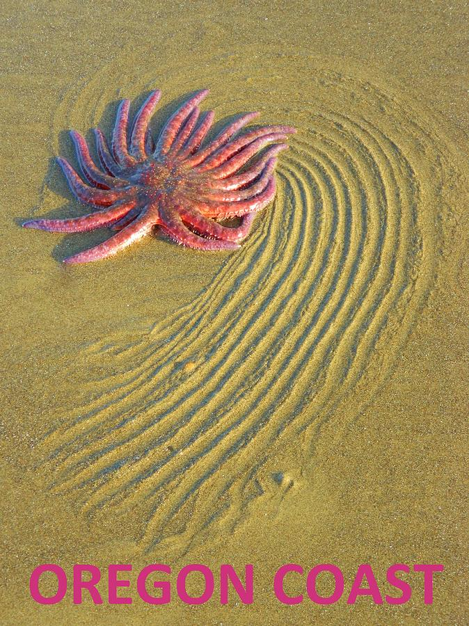 Starfish Photograph - Early Morning Rescue by Gallery Of Hope