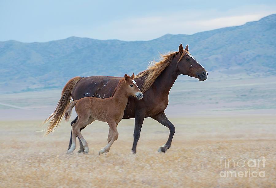 Nikon Photograph - Early Morning Run by Nicole Markmann Nelson