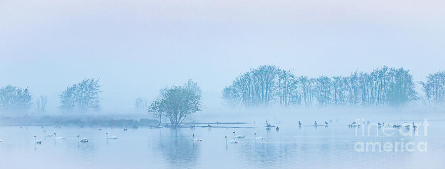 Early morning spring in Holland by Casper Cammeraat