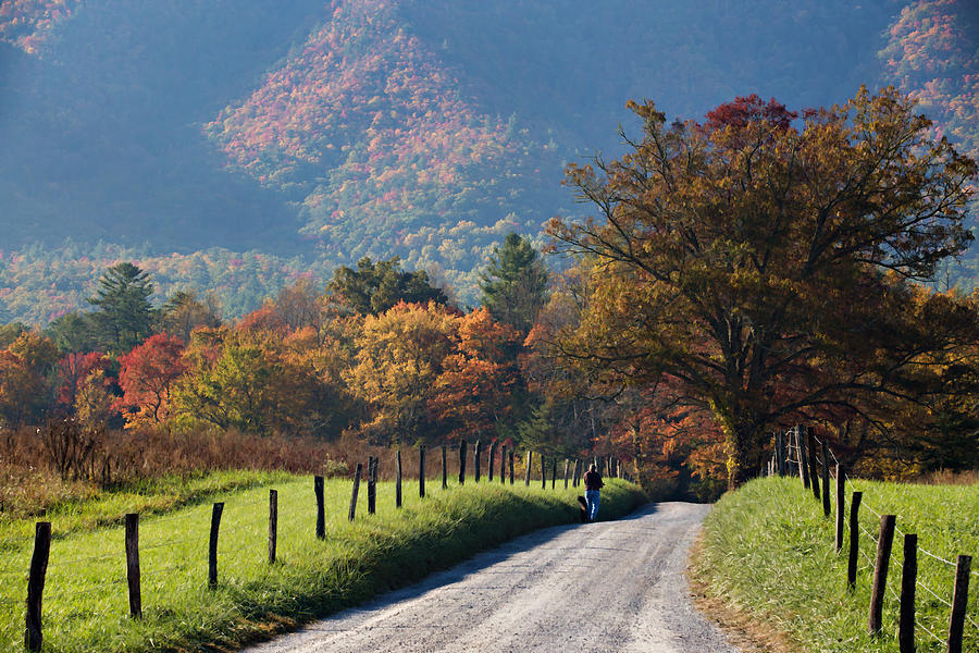 Appalachian Photograph - Early Morning Stroll by Lana Trussell