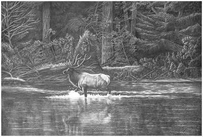 Elk Drawing - Early Morning Walk by Suzanne Reh-Faraca