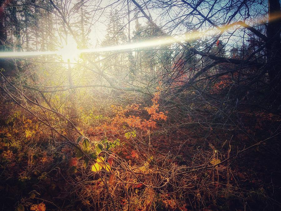 Autumn Photograph - Early Morning Winter Sun by Andy Walsh