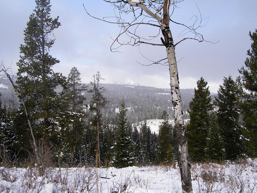 Rockies Photograph - Early Snows In The Rockies by DeeLon Merritt