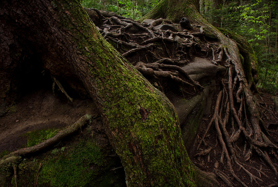 Roots Photograph - Earth Day 2012 by Maria Suhr
