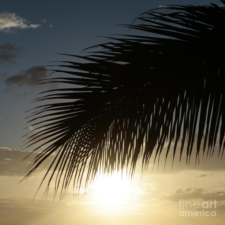 Aloha Photograph - Earth Heart by Sharon Mau