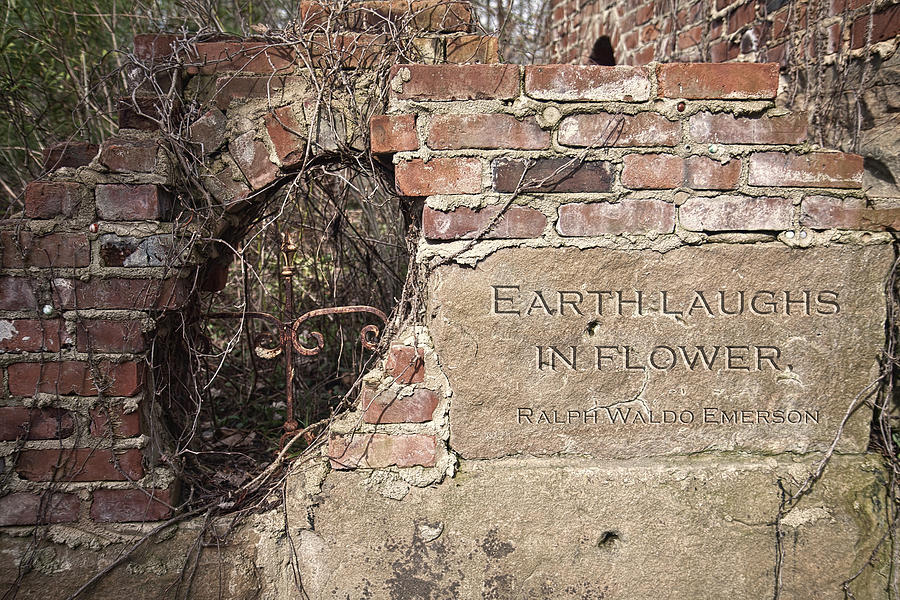 Wall Photograph - Earth Laughs in Flower Wall by Tom Mc Nemar