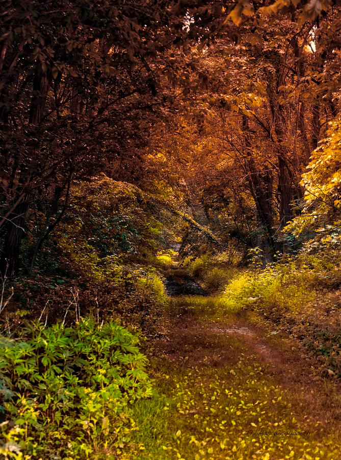 Autumn Photograph - Earth Tones In A Illinois Woods by Thomas Woolworth