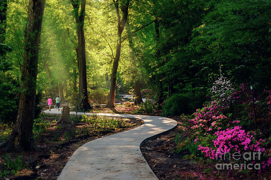 Tamyra Photograph - Earyl Morning Walk Through Honor Heights Park by Tamyra Ayles