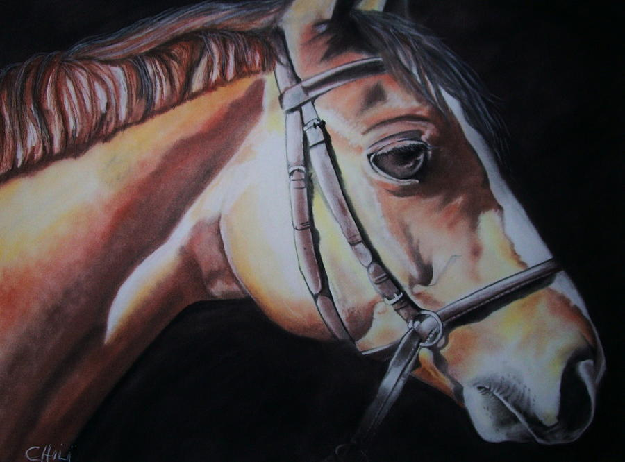 Equine Drawing - Easin Up by Diane Chilson