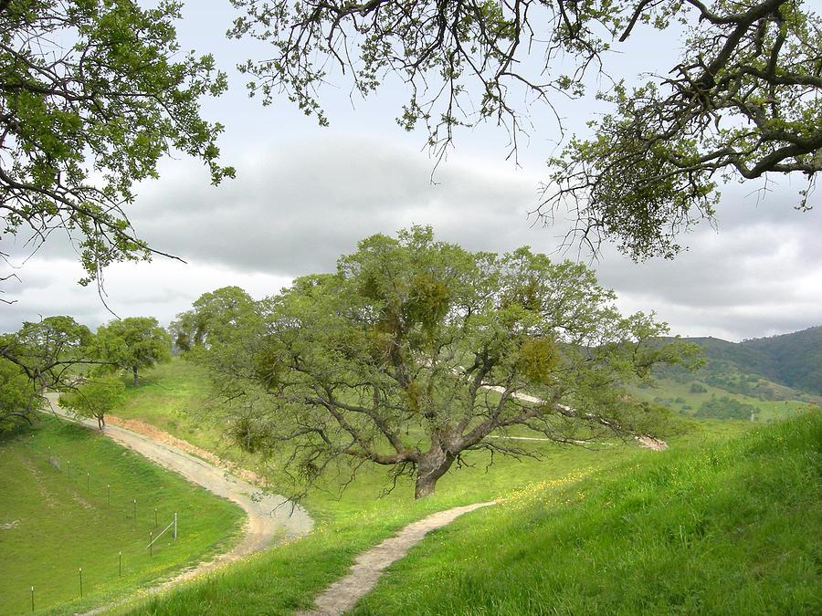 Landscape Photograph - East Ridge Trail -  Spring by Karen  W Meyer