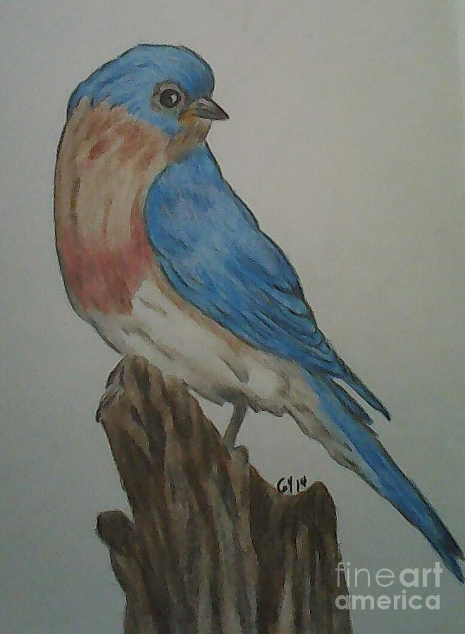 Bird Drawing - Eastern Bluebird by Ginny Youngblood