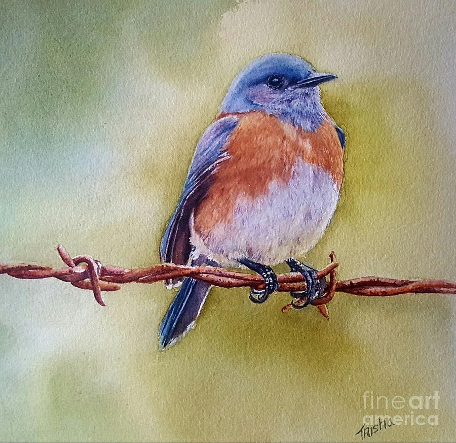 Eastern Bluebird Painting By Patricia Pushaw