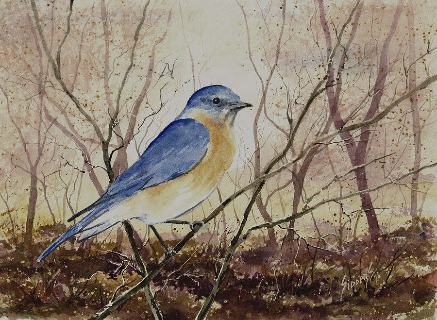 Bird Painting - Eastern Bluebird by Sam Sidders