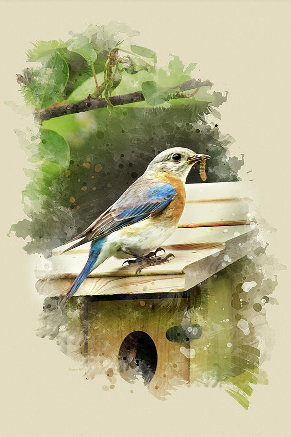 Eastern Bluebird Watercolor Art Prints for Sale