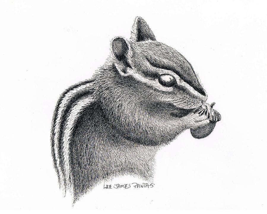 Chipmunk Drawing - Eastern Chipmunk by Lee Pantas