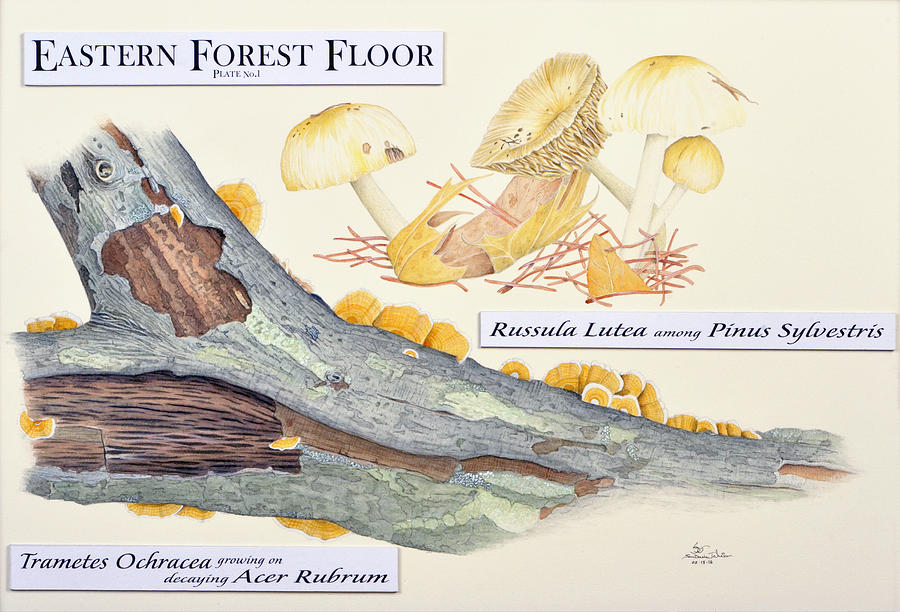 Eastern Forest Floor Plate 1 by Sam Davis Johnson