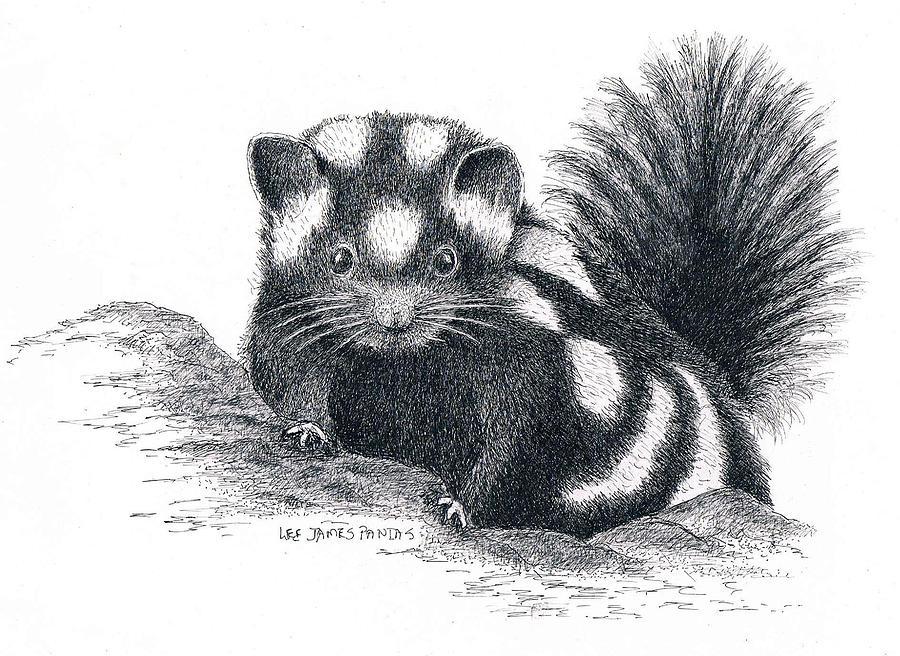 Skunk Drawing - Eastern Spotted Skunk by Lee Pantas