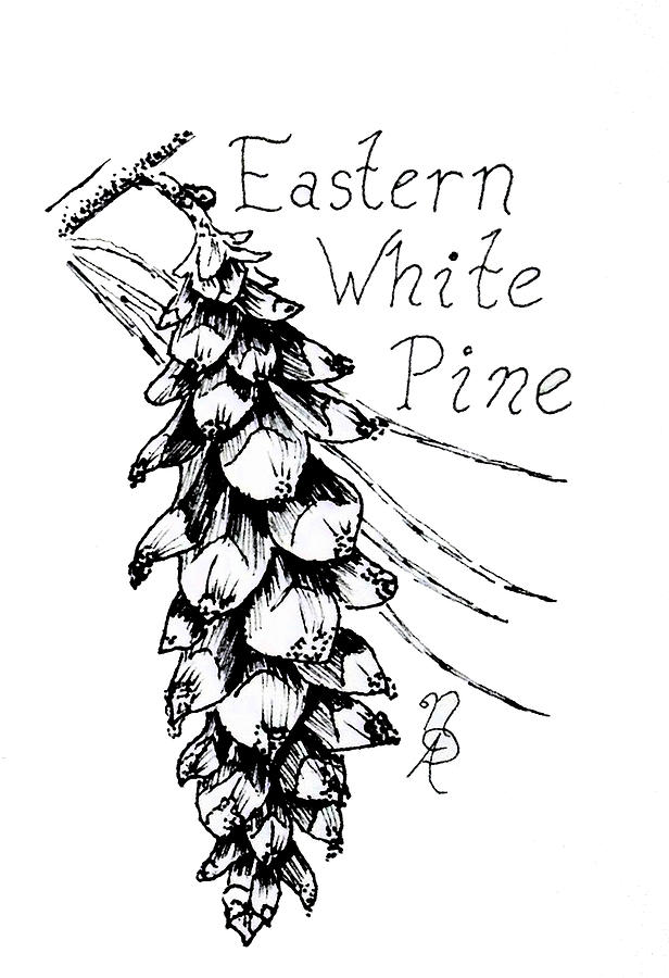 Pine Drawing - Eastern White Pine Cone On A Branch by Nicole Angell