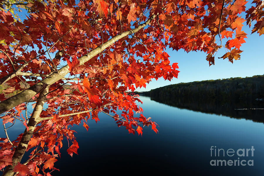 Eastman Pond Grantham New Hampshire October by Edward Fielding