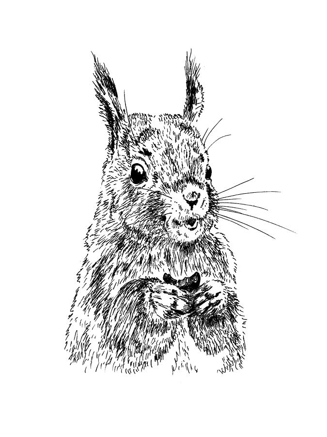 Squirrel Painting - Eating Squirrel by Masha Batkova