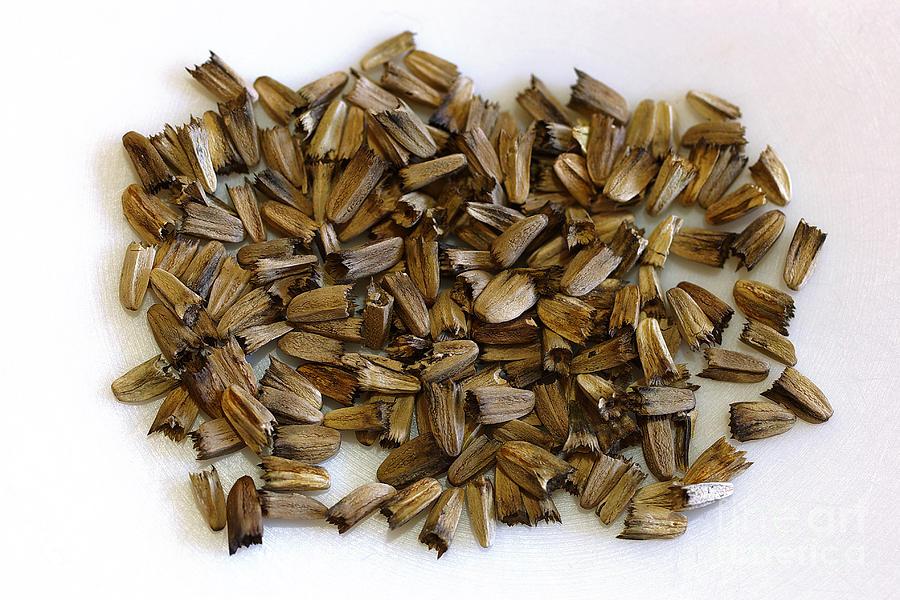 Echinacea Purpurea Seeds Photograph By Scimat,Horseradish In Spanish