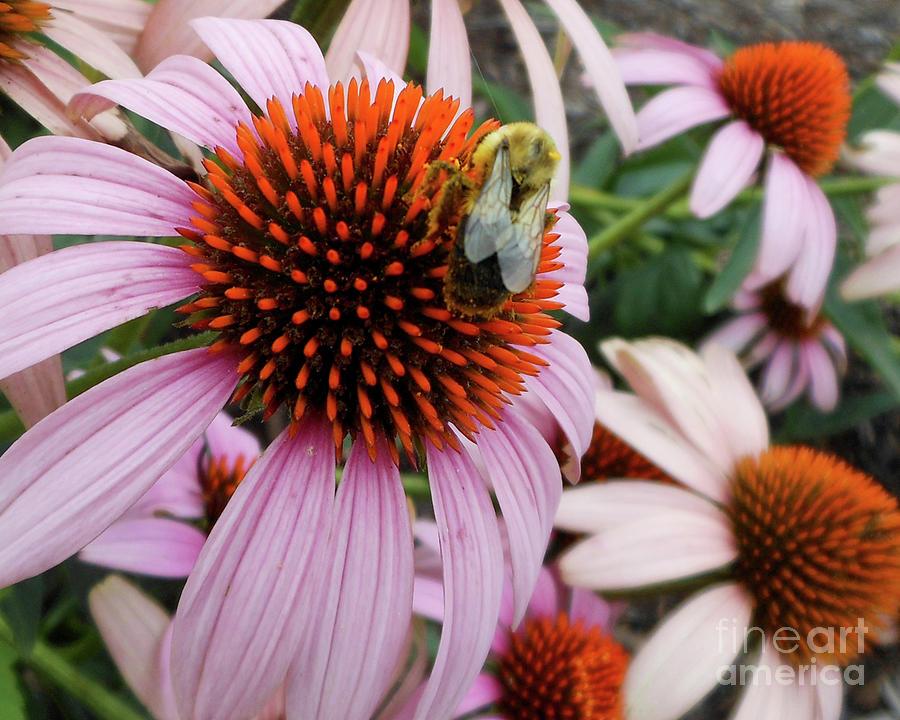 Echinacea Tea Time For Bee by Kristin Aquariann