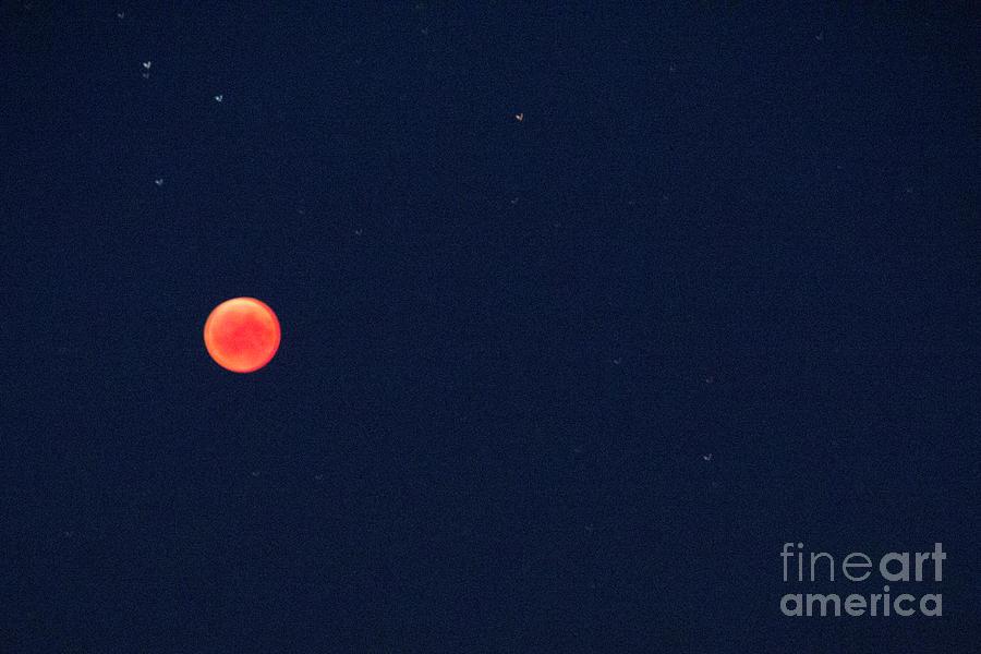 Eclipsed Beauty by Agnieszka Ledwon