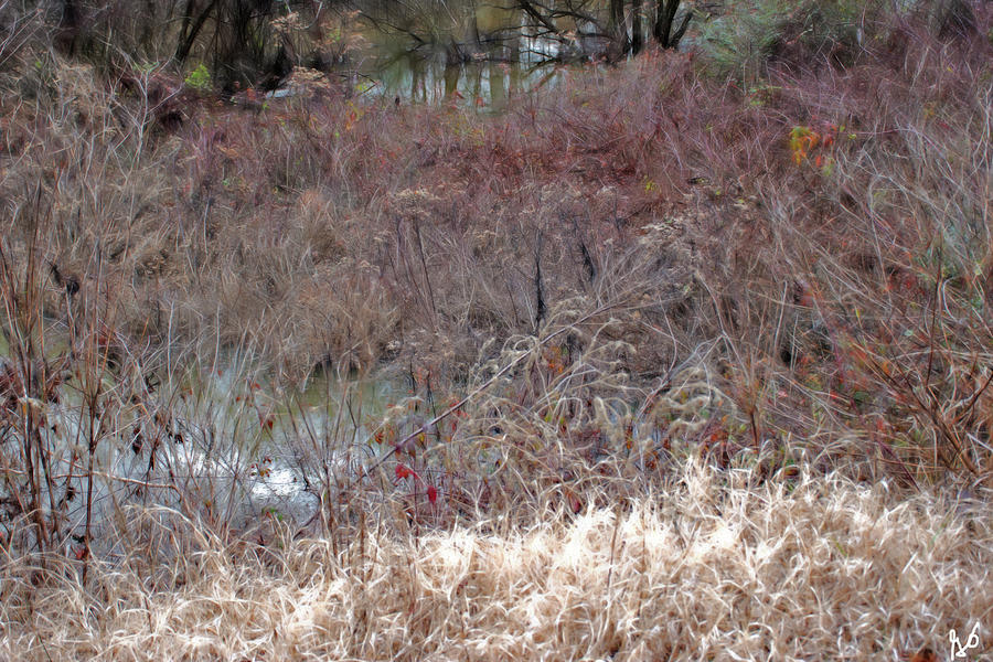 Edge of a Pond by Gina O'Brien