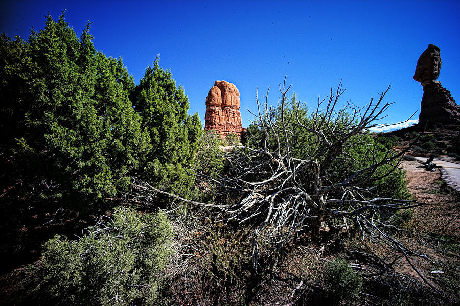 Arches National Park Photograph - Edge Of Life Arches by Lawrence Christopher