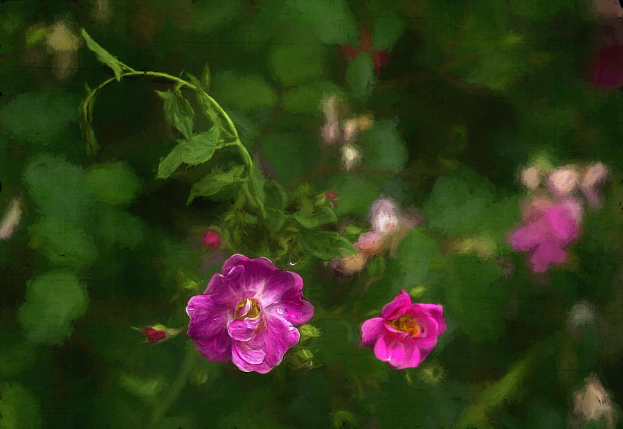 Flowers Photograph - Edgefield by Jeff Oates Photography