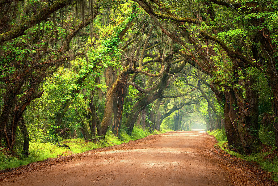 Edisto island south carolina dirt road landscape for Landscaping plants south carolina
