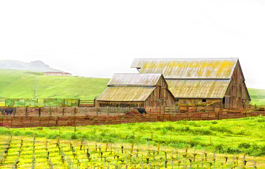 Vineyard Digital Art - Edna Valley Ranch by Patricia Stalter