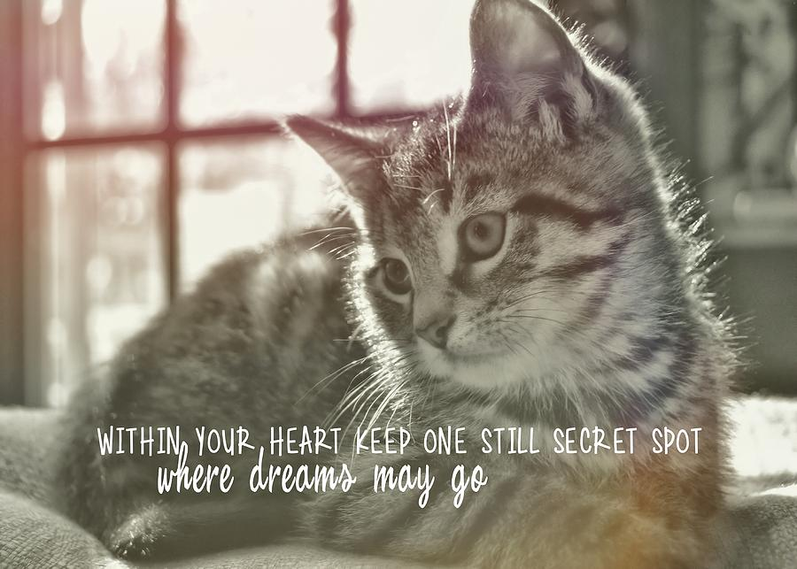 Cat Photograph - Edward Quote by JAMART Photography