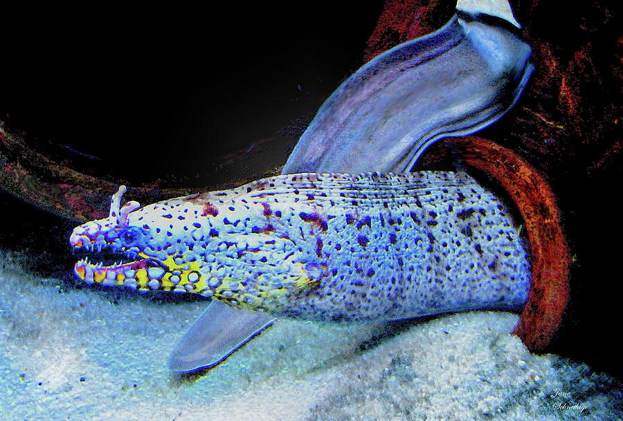 Eel Digital Art - eel by Jane Schnetlage
